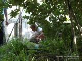 В садово-огородных дебрях