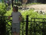 А где здесь жираф?