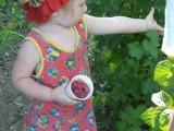 Сама собрала полный стаканчик малины