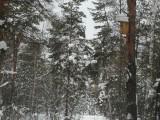 Лыжня по дороге на Голубое озеро