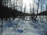 Весеннее солнце на опушке леса