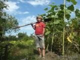 Фото мальчик с лопатой в подсолнухах