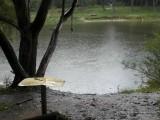 Фото осенний дождь на берегу пруда