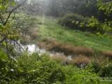 Фото осенний лес после дождя