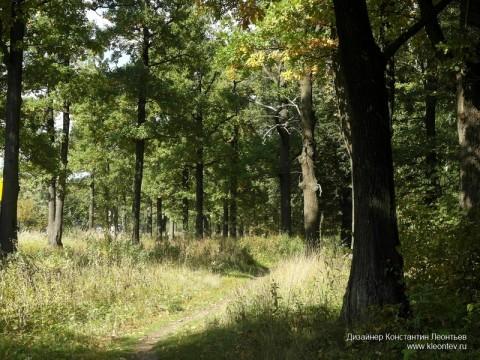 Фото осень в дубовом лесу