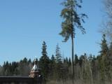 Стена монастыря и сосны