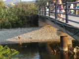 Глазеем на уток в Баре