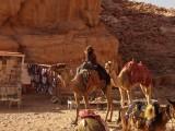 Колоритный бедуин
