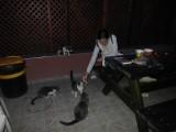 Кормление кошки питой