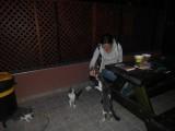 Голодные кошки в Неве-Зоар