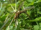 Фото стрекозы в траве