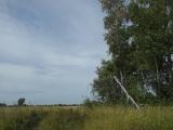 Поля на запад от Асино