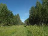 Дорога в Ново-Кусково вдоль Соколы