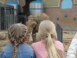 Наблюдение слона