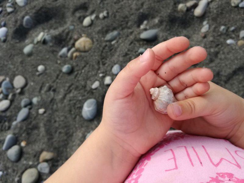 Вот такие ракушки можно найти на пляже