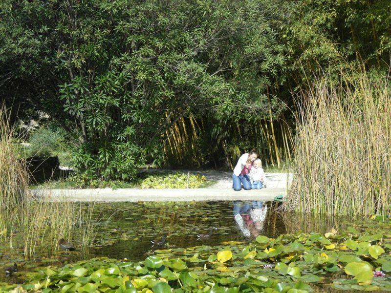 Маленький пруд у бамбуковой рощи