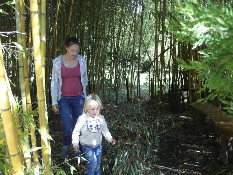 Лавочки в зарослях бамбука