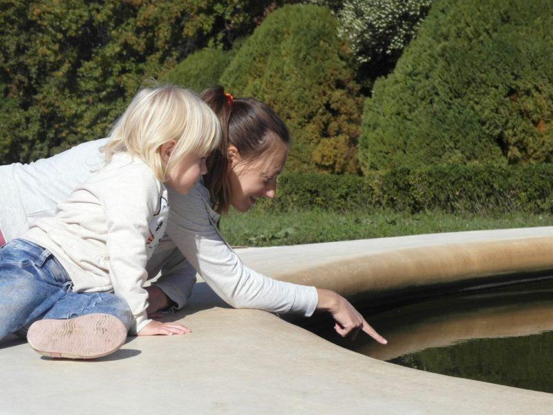 В фонтане нашли большую жабу